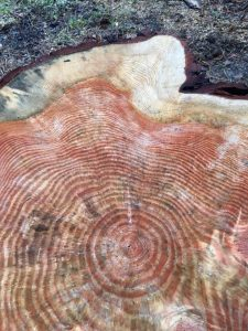 Tree Rings as Evoution of Self